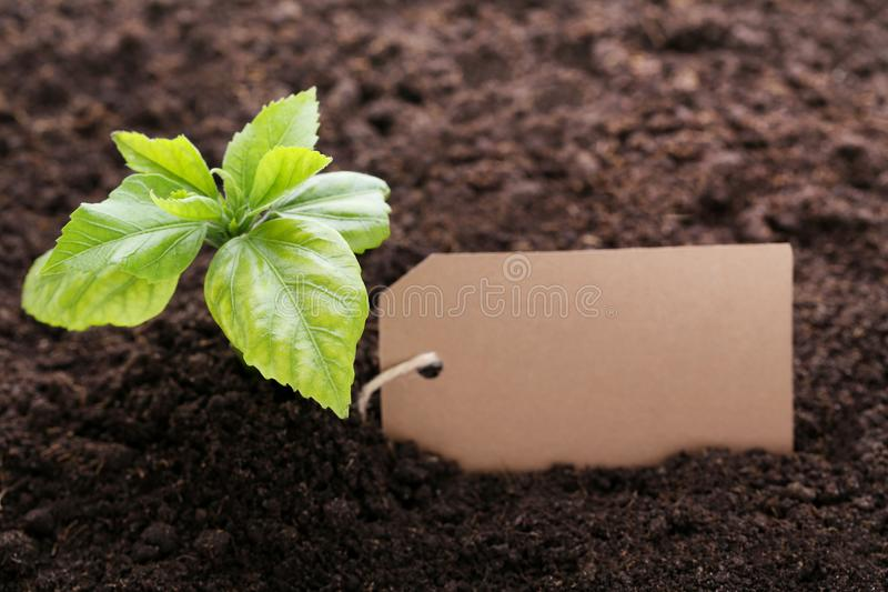 Young plant with blank card royalty free stock photos