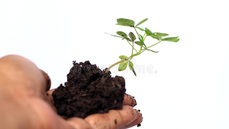 Planting trees on a white background royalty free stock photography