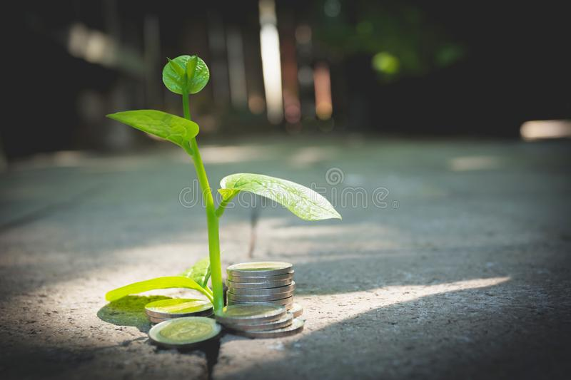 Young green plant with stack coin on ground for growing business royalty free stock photos
