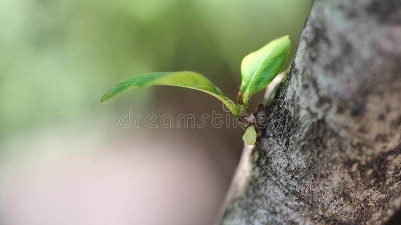Young green plant in tree. New born plant. Begin a new life stock photo