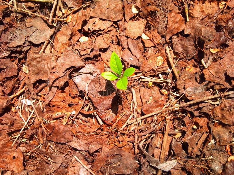 The young green sprout. The young green sprout in the faded foliage stock photos