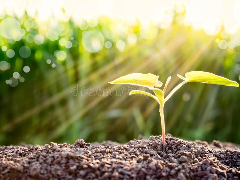 Young green sprout growing out from soil. New life and ecology concept.  royalty free stock images