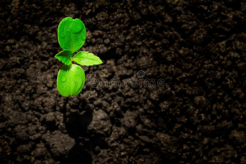 Young green sprout with water drop growing up from soil partly in shade and partly in light, environmental concept royalty free stock images