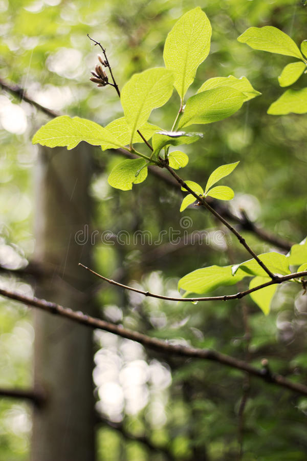 Young greenery tree branch royalty free stock image