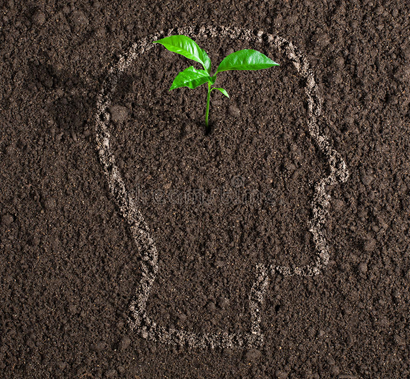 Young growth of idea inside of human head on soil concept. Young growth of idea inside of human head contour on soil concept stock photos