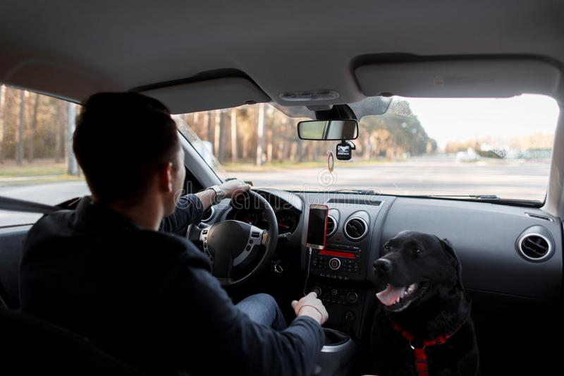 Young guy with a dog is driving in the car. Journey. stock image