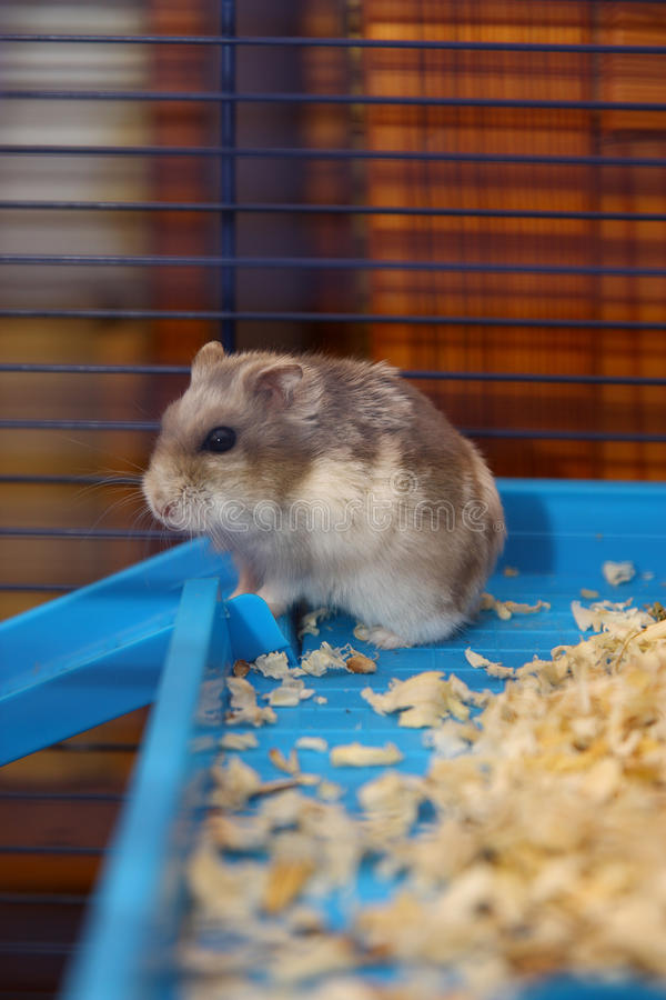 Young hamster. Small and young hamster in your cage stock photo
