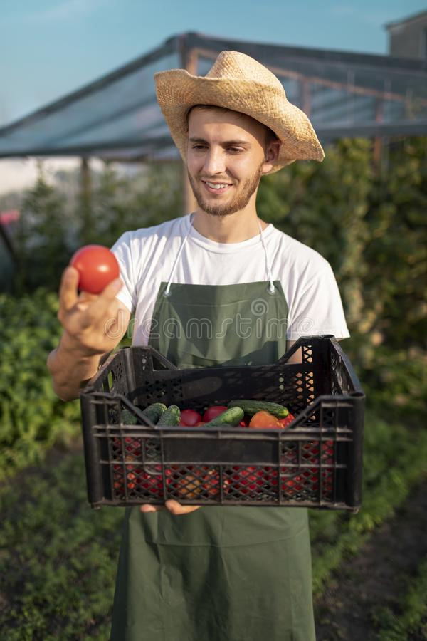 Young Handsome Bearded Farmer Estimating Harvest stock image