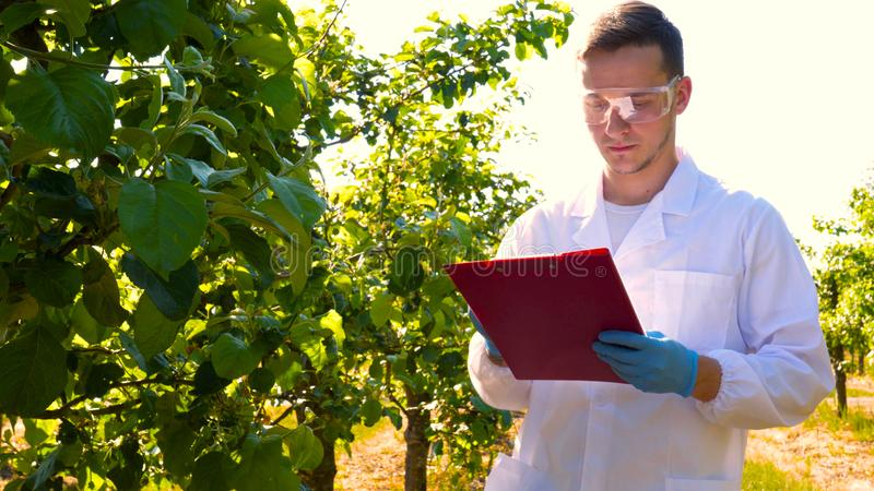 A young handsome male biologist or agronomist, working in a tablet, wearing a white coat, wearing goggles, wearing blue rubber g royalty free stock image