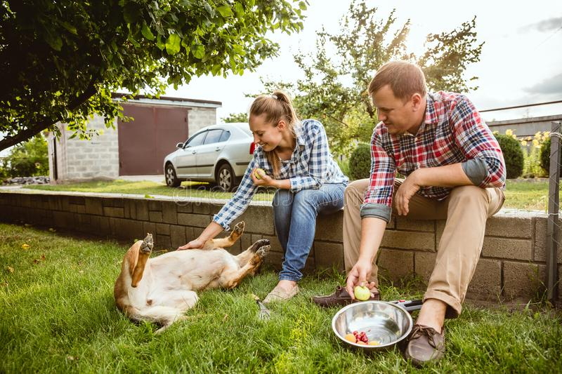 Young and happy farmer`s couple at their garden in sunny day stock images