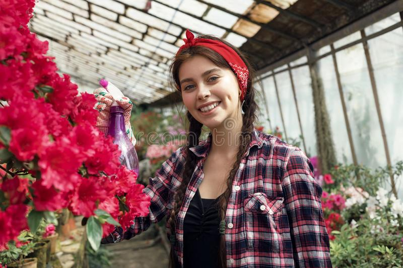 Young happy girl gardener in a plaid shirt with a red headband watering flowers. Young happy girl gardener in a plaid shirt with a red headband watering colorful stock photos