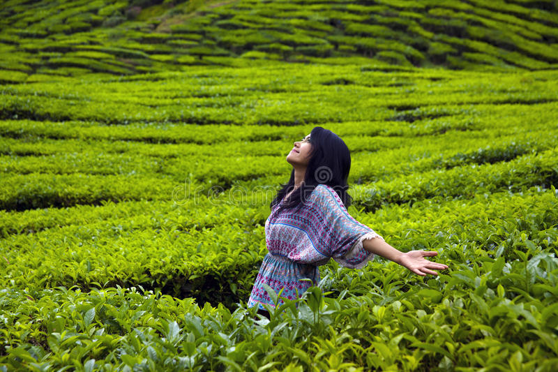 Young happy woman spreading hands with joy in tea plantation, Cameron highlands, Malaysia royalty free stock images