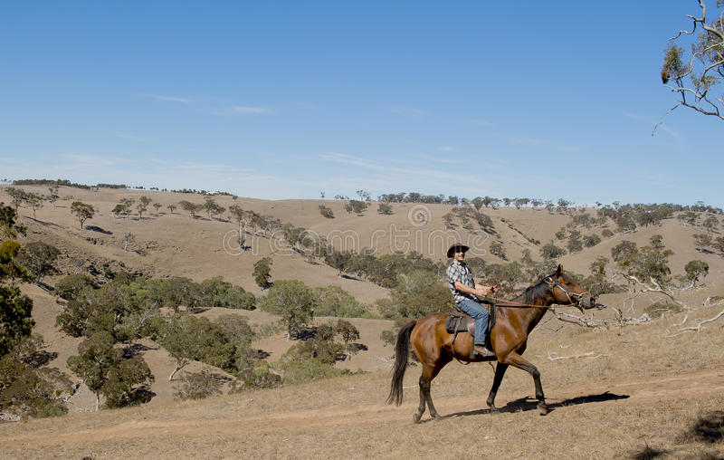 Young horse instructor or cattleman riding the animal in cowboy hat and rider boots. Young horse instructor or cattleman riding the animal wearing cowboy hat and royalty free stock image