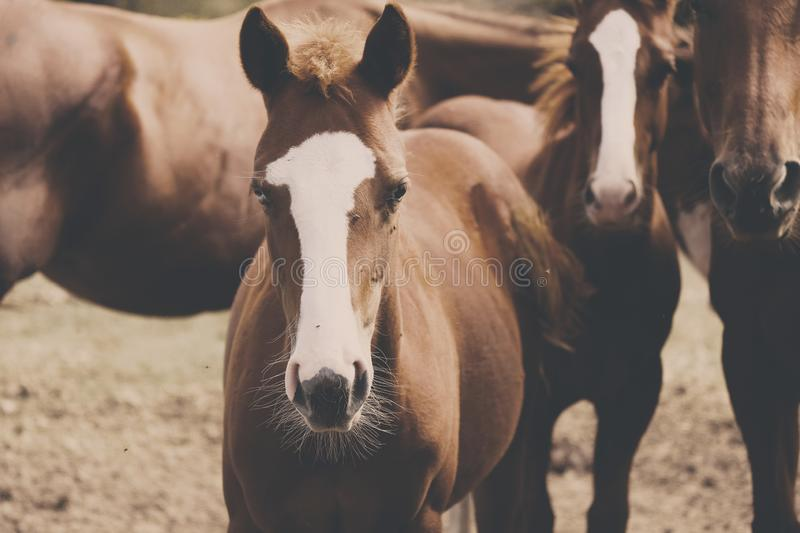 Young horse on ranch within herd royalty free stock photography