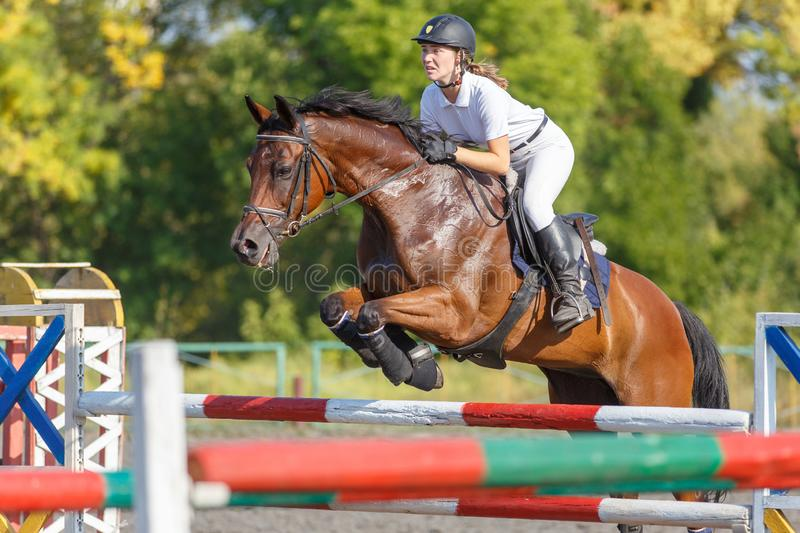 Young horse rider girl on show jumping competition. Young horse rider girl jumping over a hurdle on show jumping competition stock image