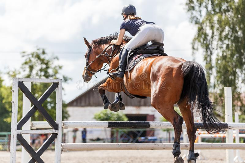 Horse rider woman on show jumping competition. Young horse rider woman jumping over the obstacle on show jumping competition. Equestrian sport background stock image