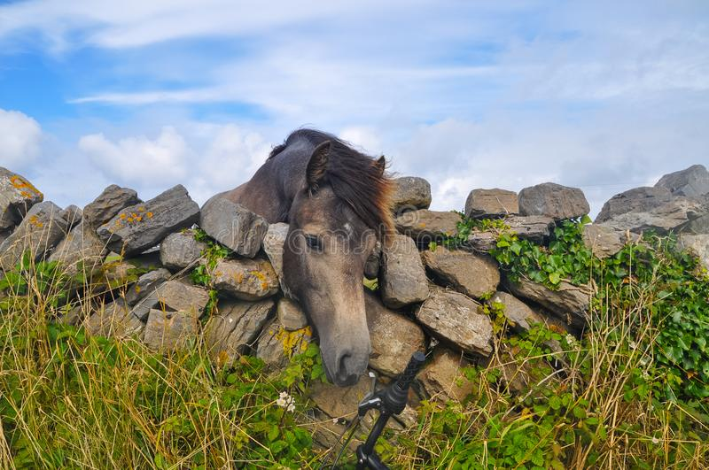 Young Horse`s head close up, curious animal drawing it`s nose to bicycle over stone fence stock photos