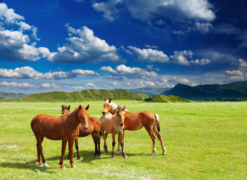 Download Young horses stock image. Image of horses, pasture, bronco - 25045517
