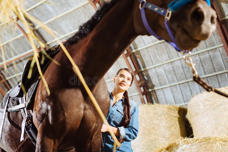 Young horsewoman with long dark hair feeding her racing horse. Young horsewoman. Young horsewoman with long dark hair feeling cheerful while feeding her racing royalty free stock image