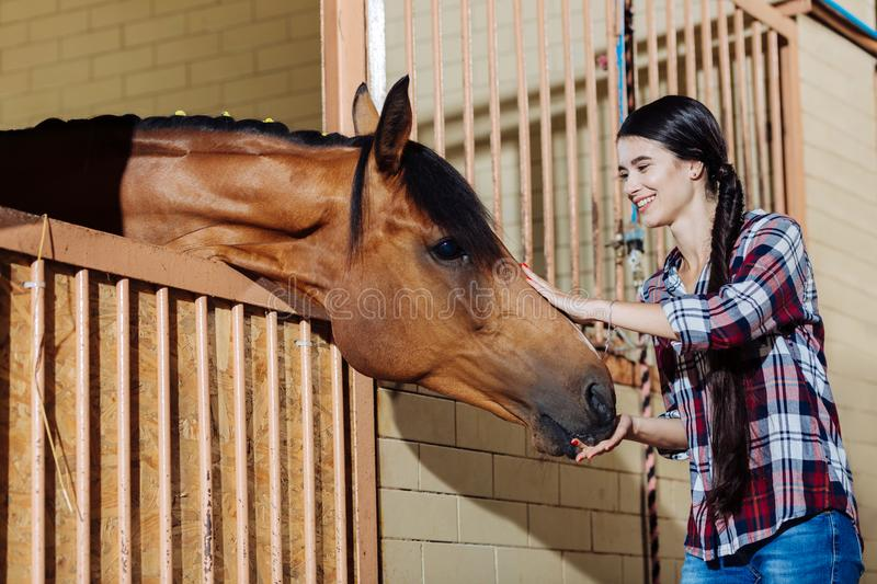Young horsewoman standing in stable and petting dark horse. Young horsewoman. Young appealing dark-haired horsewoman standing in stable and petting dark horse stock photography