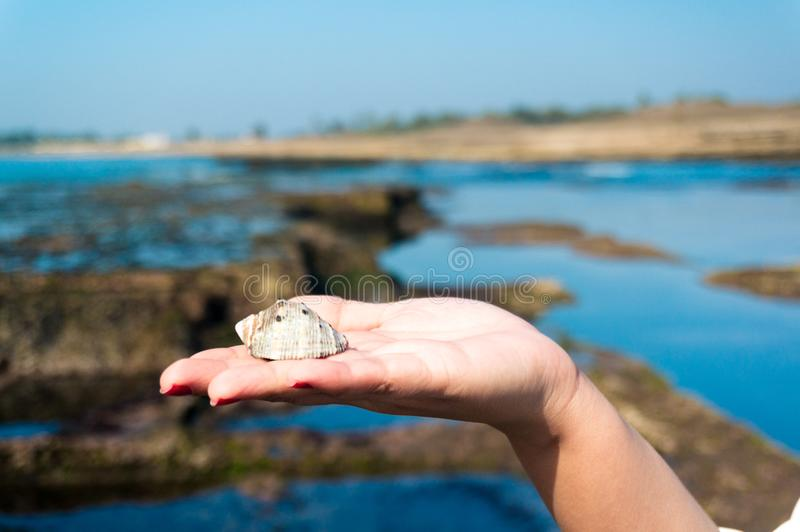 Young indian woman holding up a sea shell with the blue water pools in the background royalty free stock photo