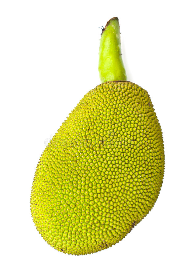 Download Young jackfruit isolated. stock photo. Image of food - 24805412