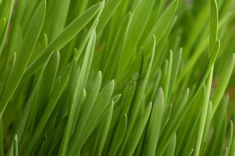 Download Young juicy green grass stock photo. Image of lawn, green - 4031196
