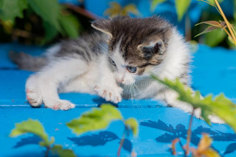 Young kitten on a blue bench royalty free stock photo