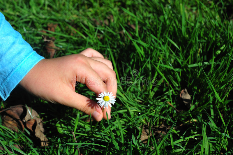 Download Young Lady Picking A Flower Royalty Free Stock Photography - Image: 6996737