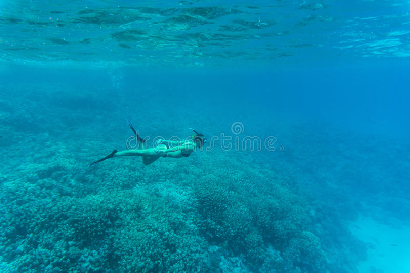Young lady swimming underwater over coral reefs in a tropical sea royalty free stock photos