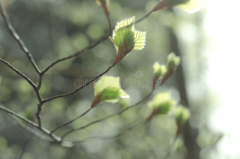 Young Leafs Stock Image. Image Of Young, Leafs, Blur