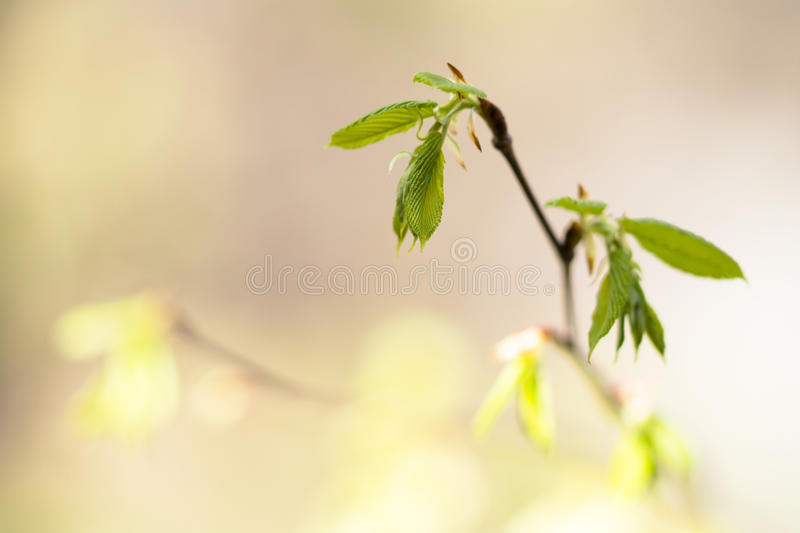 Download Young leaves stock photo. Image of park, nature, summer - 24890228