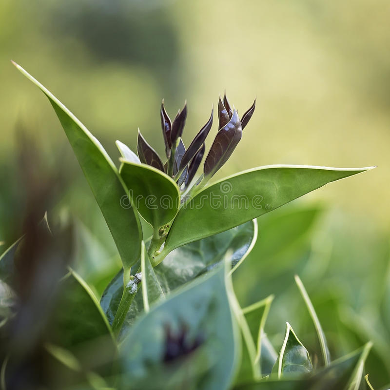 Young leaves coming to life stock images