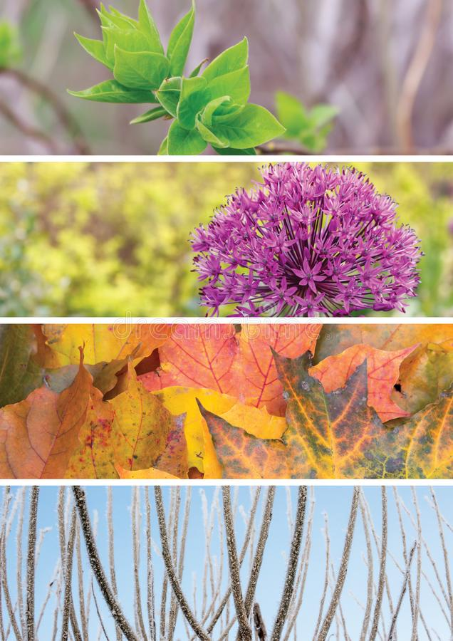 Collage of scenes of the four seasons: spring, summer, fall, winter. Young leaves of lilac, ornamental onions, autumn leaves, winter tree branches of a tree in royalty free stock photo