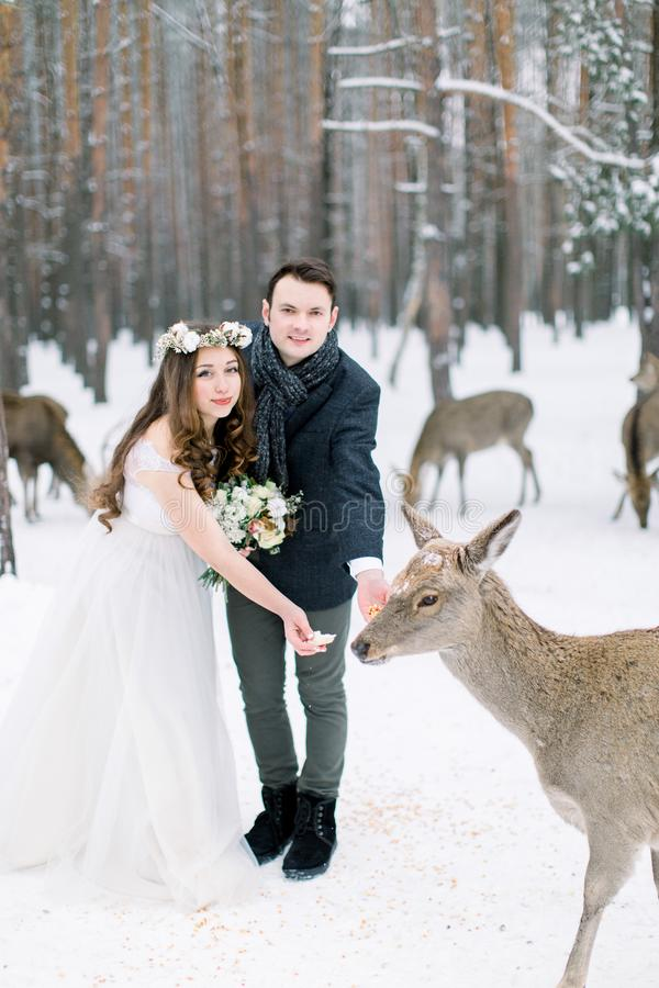 Young loving fashionable beautiful wedding couple outdoor in winter forest feeding deer. Beauty, happiness, love. Seasons concept stock photography