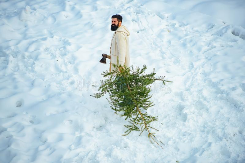 Young lumberjack bears fir tree in the white snow background. A handsome lumber with a beard carries a Christmas tree. Merry Christmas and Happy Holidays stock images
