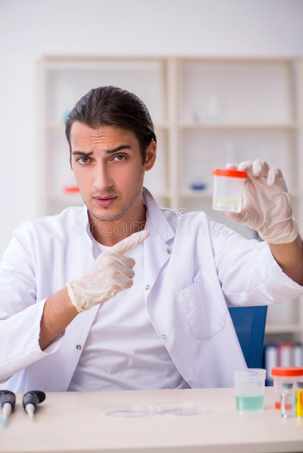 Young male chemist working in the lab. The young male chemist working in the lab stock photography