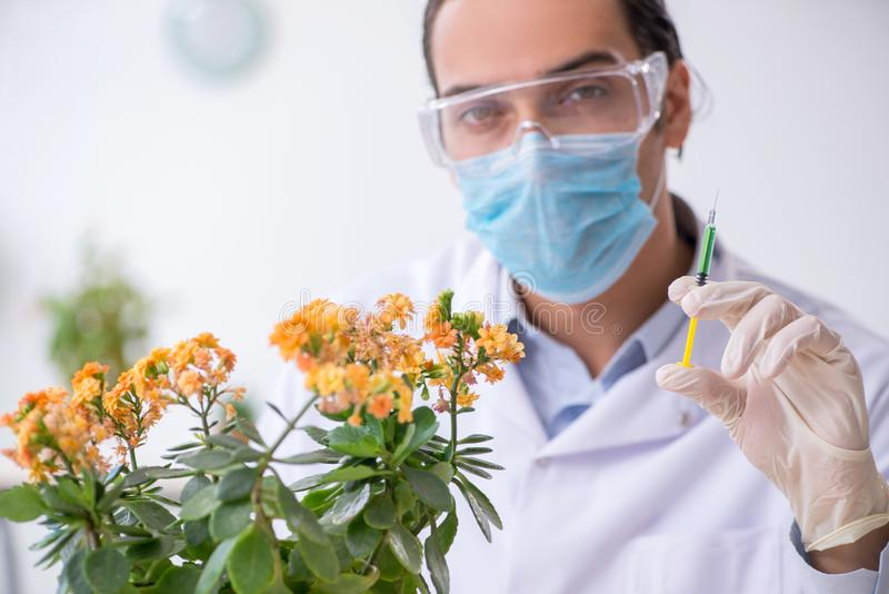 Young male chemist working in the lab. The young male chemist working in the lab royalty free stock images