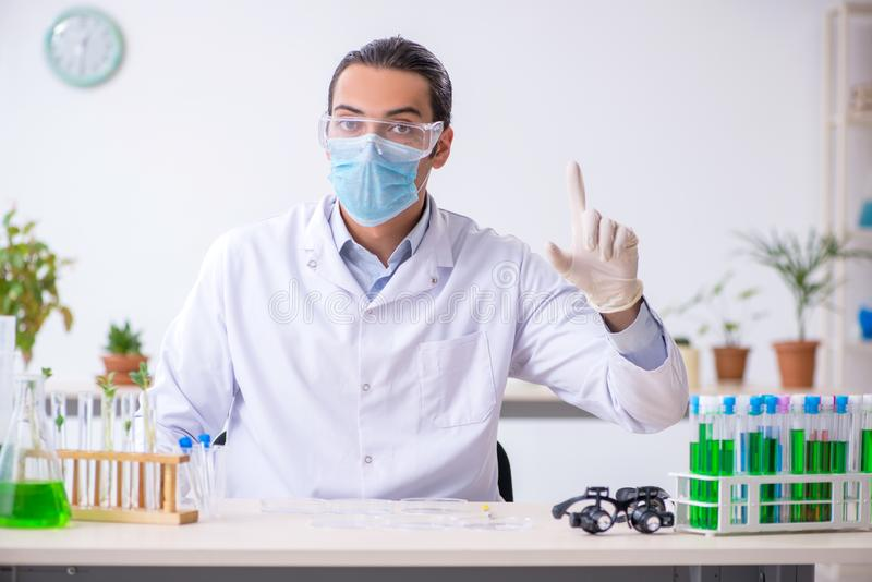 Young male chemist working in the lab. The young male chemist working in the lab stock photos