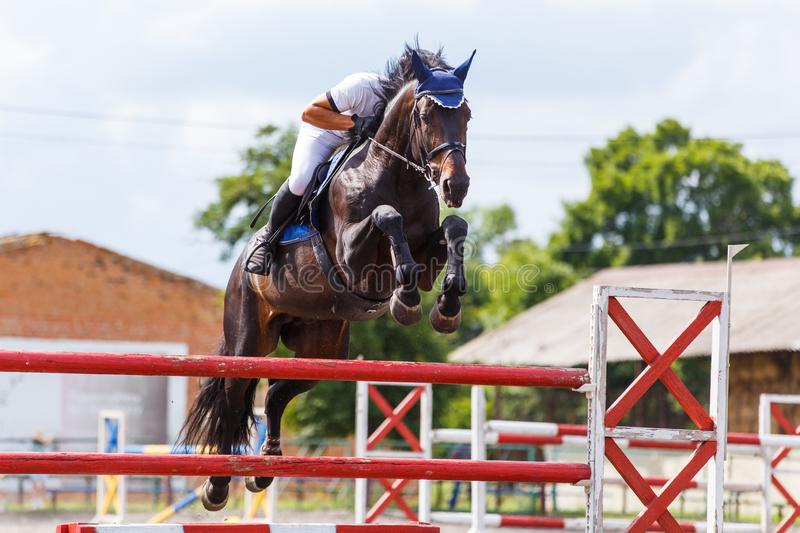 Young male horse rider on show jumping competition. Young male horse rider on equestrian sport competition in show jumping contest stock images