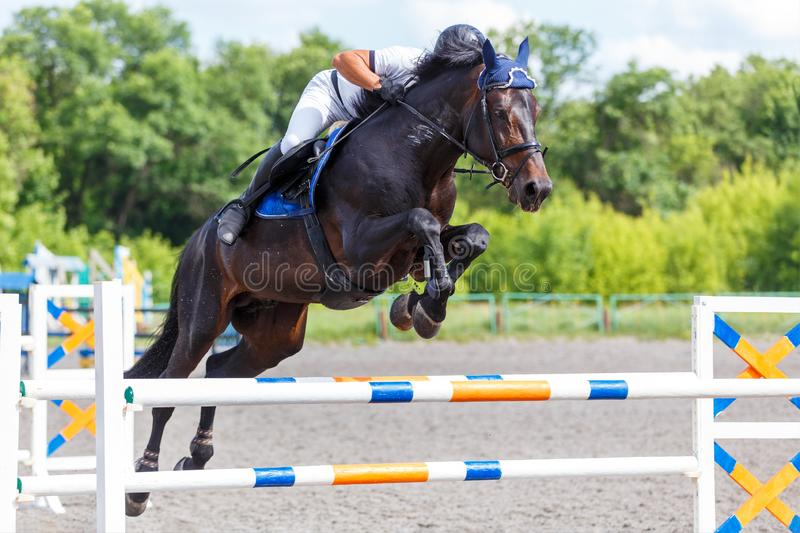 Young male horse rider on show jumping competition. Young male horse rider on equestrian sport competition in show jumping contest stock photos