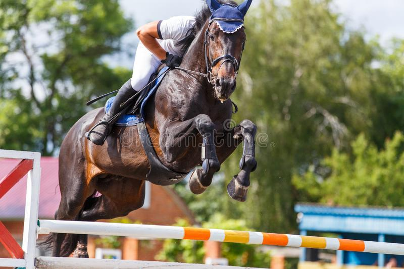 Young male horse rider on show jumping competition. Young male horse rider on equestrian sport competition in show jumping contest royalty free stock photos