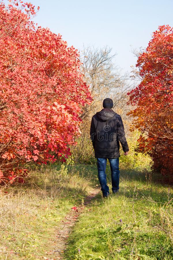 Young man autumn on walk through nature among trees, pensive royalty free stock image
