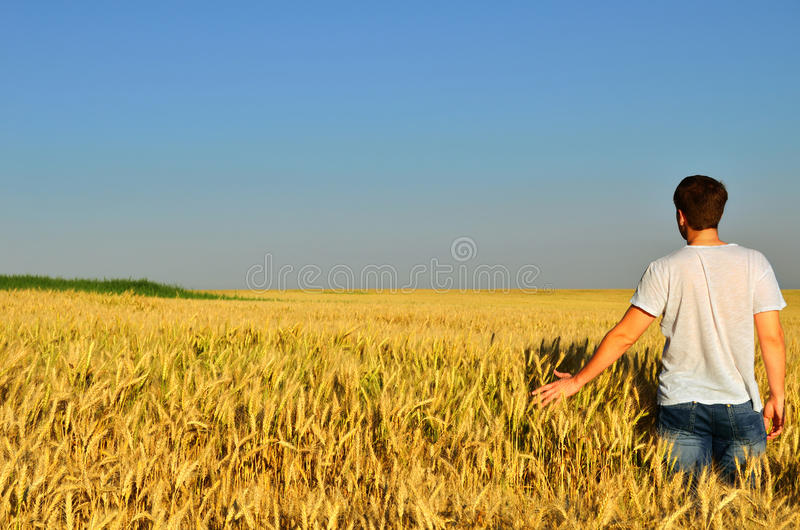 Young man in a barley field stock images