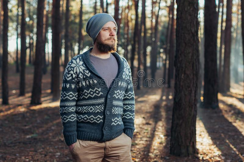A young man with a beard walks in a pine forest. Portrait of a brutal bearded man Autumn forest stock images
