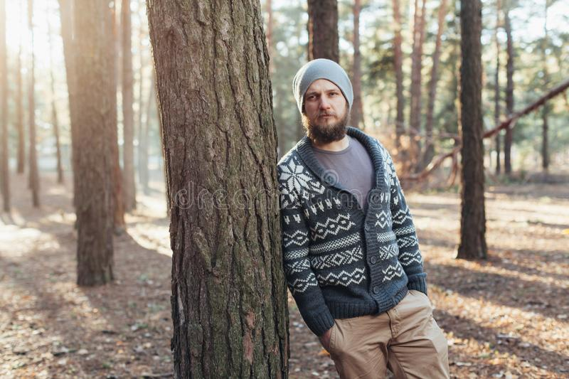 A young man with a beard walks in a pine forest. Portrait of a brutal bearded man Autumn forest stock photo