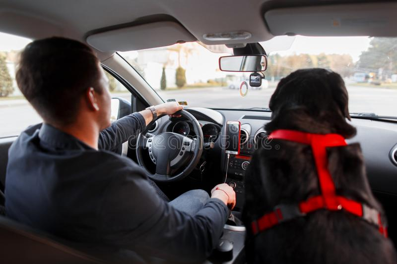 Young man with the best friend dog travels in the car royalty free stock image