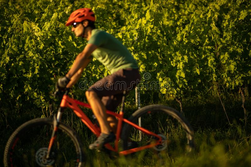 Young man biking on a mountain bike royalty free stock images
