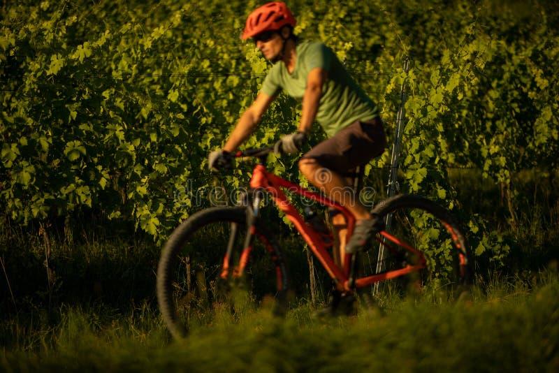 Young man biking on a mountain bike royalty free stock image