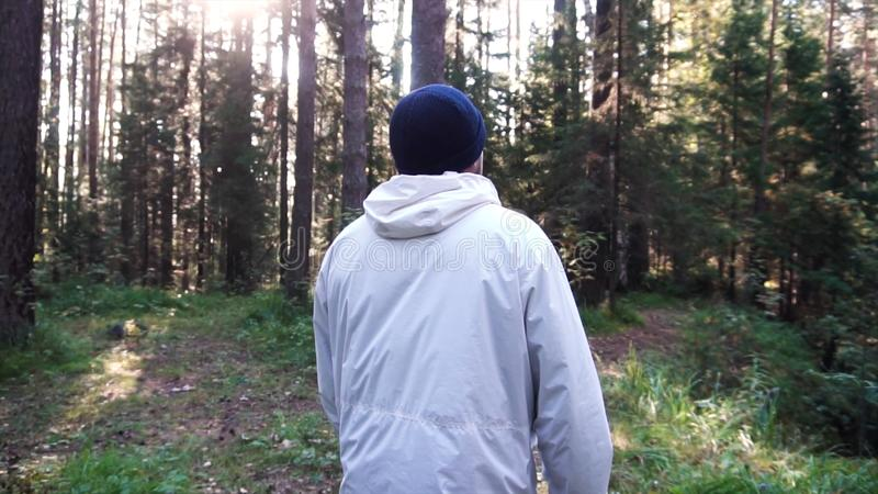 Young man on camping trip. Footage. Concept of freedom and nature. View of man from back walking in woods along path on stock photography